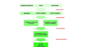 Biogas Information